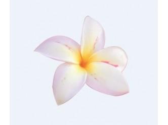 Huile à la fleur de Tiaré et fleur blanche