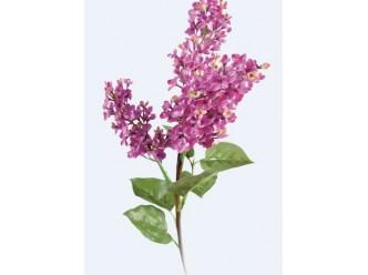 Huile fleur de Lilas