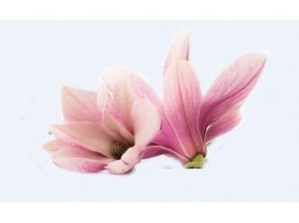 Huile à la fleur de Magnolia